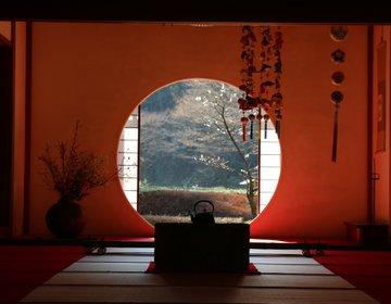 【神奈川・鎌倉】紫陽花を見に行くならココ!明月院は、四季折々の姿も美しい♪