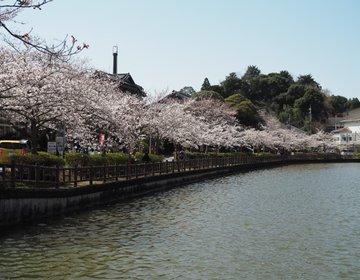 【千葉・東金】千葉の桜の名所!家康ゆかりの地、東金にある八鶴湖に行ってみた♪