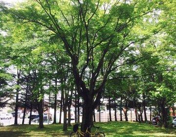 アウトドア派カップルにおすすめ!今年の夏は格安新幹線で行く軽井沢に決まり!
