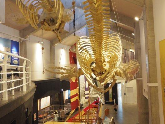 キラメッセ・室戸鯨館