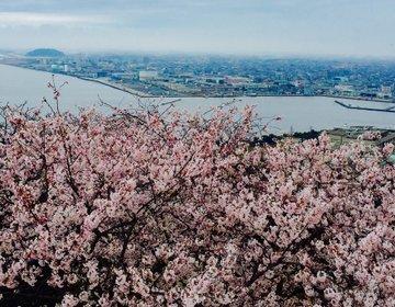 【今年の春はどこで花見?】山陰旅行で米子城跡から眺める桜と中海!