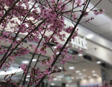 【雨の日過ごし方】恵比寿おすすめマッサージ・恵比寿おすすめカフェでのんびり♡