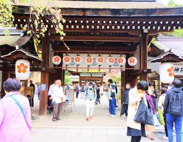 【約60種類の桜が400本!】境内が桜まみれ!京都にある家紋が桜の平野神社で体験する圧倒的なお花見!