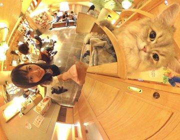 電源Wi-Fiフリードリンクあり!猫カフェMOCHA(モカ)で始める、新しいノマドワークのカタチ♡