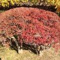 浜離宮恩賜庭園 (Hamarikyu Garden)