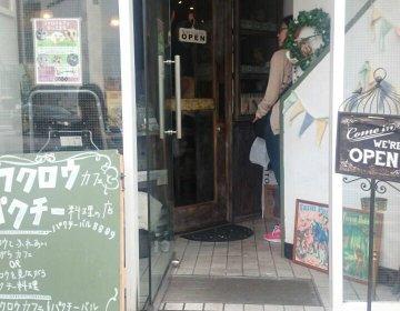 【パクチーバル8889】フクロウと心行くまで楽しめる!夜はパクチー料理店に変身!!