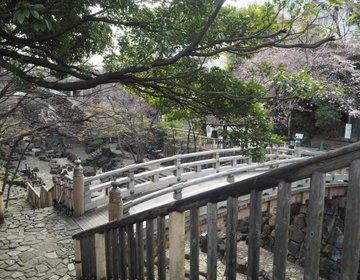 【江戸の桜の名所 飛鳥山公園】晴れの日にカメラを持ってお出かけスポット