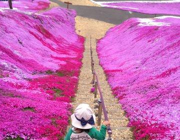 【北海道・網走方面】壮大なピンクとブルーの景色〜ひがしもこと芝桜公園・サロマ湖〜