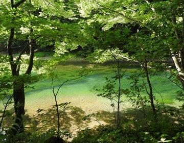 マイナスイオンを浴びに【奥入瀬渓流・十和田湖】へ