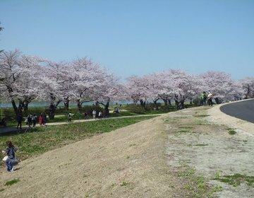 【桜満開】岩手県の北上展勝地で贅沢なお散歩を楽しむ!