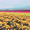 ファーム富田 (Farm Tomita)