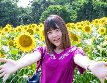 千葉でひまわり畑に癒されるデート「佐倉ふるさと広場」「成田ゆめ牧場」日帰り電車旅♡