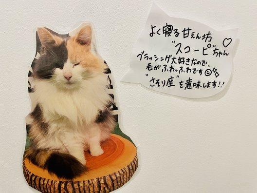 ねこのダヤンと猫の島カフェ