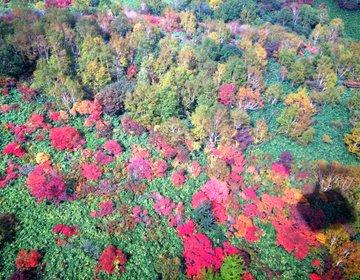 """【秋デートにオススメ♪】""""那須ロープウェイ""""から見下ろす那須連山の紅葉が絶景すぎる!"""