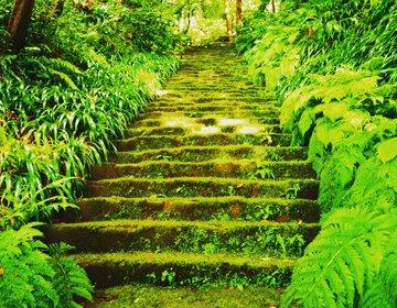 【穴場スポット】雨の日がオススメ!鎌倉の苔寺巡りで自然のパワーに癒されよう♡