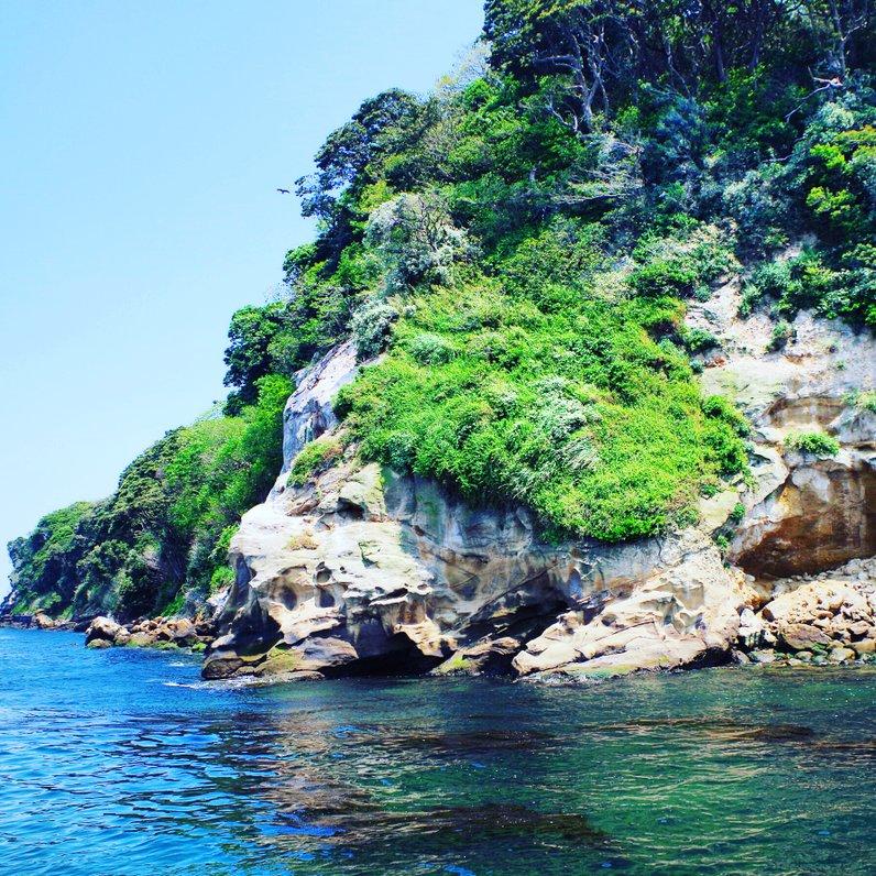 원숭이 섬