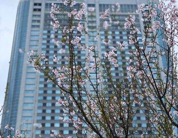 都内おすすめお花見!東京ドーム周辺・水道橋・後楽園おすすめランチ♡
