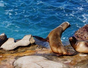 サンディエゴ旅でアシカとアザラシが見れる絶景スポット! ファミリーや女子旅に