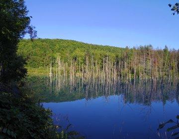 北海道・美瑛のおすすめ観光スポット!美しすぎる「青い池」7万㎡の広大な花畑「四季彩の丘」