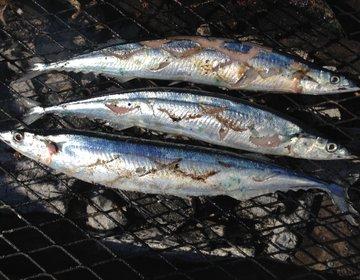 根室さんま祭り 無料で食べ放題の「とろさんま」を岸壁炉端で炭火焼き