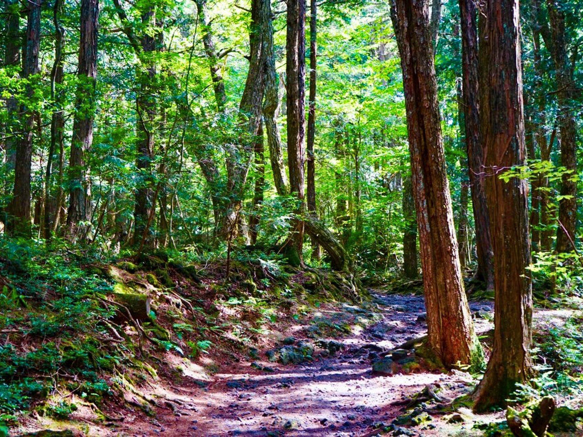 樹海の洞穴巡りも探検する休日アドベンチャーツアー 富士山行くなら迷いの森青木ヶ原樹海を散策しよう
