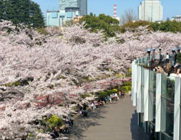 都内おすすめお花見スポット!六本木・東京ミッドタウン桜観ながらランチ女子会♡