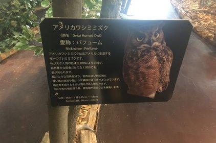 嚴島フクロウの森