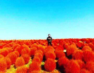 【他と差をつける紅葉写真】紅葉写真は絶対ココ!写真好き必見!茨城へロングドライブ!