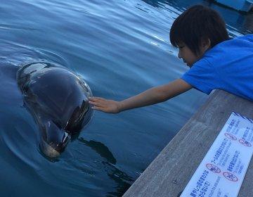 イルカや海の生き物と触れ合う‼︎横浜八景島シーパラダイスと家族みんなで温泉シーサイドスパ八景島へ☆