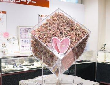 【珍スポット】超絶シュール!1億5千万円の入れ歯を見に、歯ART美術館に行ってきた!