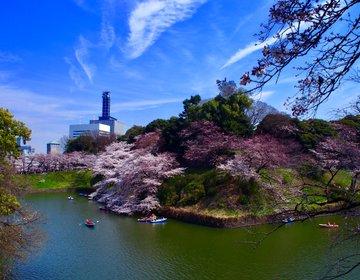 千鳥ヶ淵周辺を極めるお花見!桜の時期にオススメです。【竹橋・千鳥ヶ淵・お花見・靖国神社・武道館】