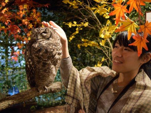 京都のフクロウの森