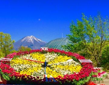 【日本最大級のフラワーパークへ】鳥取県観光で行きたい大山麓のとっとり花回廊