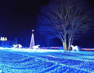 """《今1番行きたい》関西最大級のイルミネーション""""京都イルミエール""""が想像以上に美しかった!"""