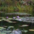 モネの庭 マルモッタン (Jardine de Monet Marmottan)