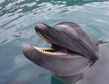 【梅雨限定・雨の日割あり】高知県室戸ドルフィンセンターでイルカと泳いで、パワースポットめぐり!