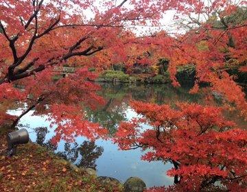 【紅葉の京都をお母さんと旅行】紅葉のお寺と抹茶スイーツをメインに。【1・2日目】