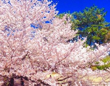 【春になったら行こう】新宿御苑で美しい桜を楽しんだ後はだんごを食べよう