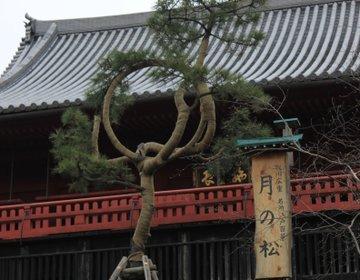 """【上野散歩】上野にもあった""""清水の舞台""""!そして都会のオアシス""""不忍池""""では古代蓮に癒されよう♪"""
