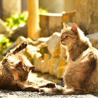 【完全保存版!】猫好きに絶対行ってほしいスポット厳選集