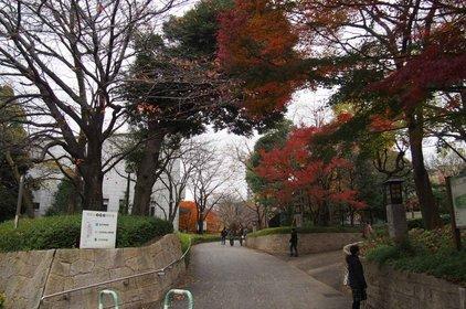 旧渋沢庭園