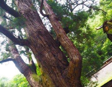 最強のパワースポット!【若狭姫神社】福井県小浜市の千年杉を訪ねて。