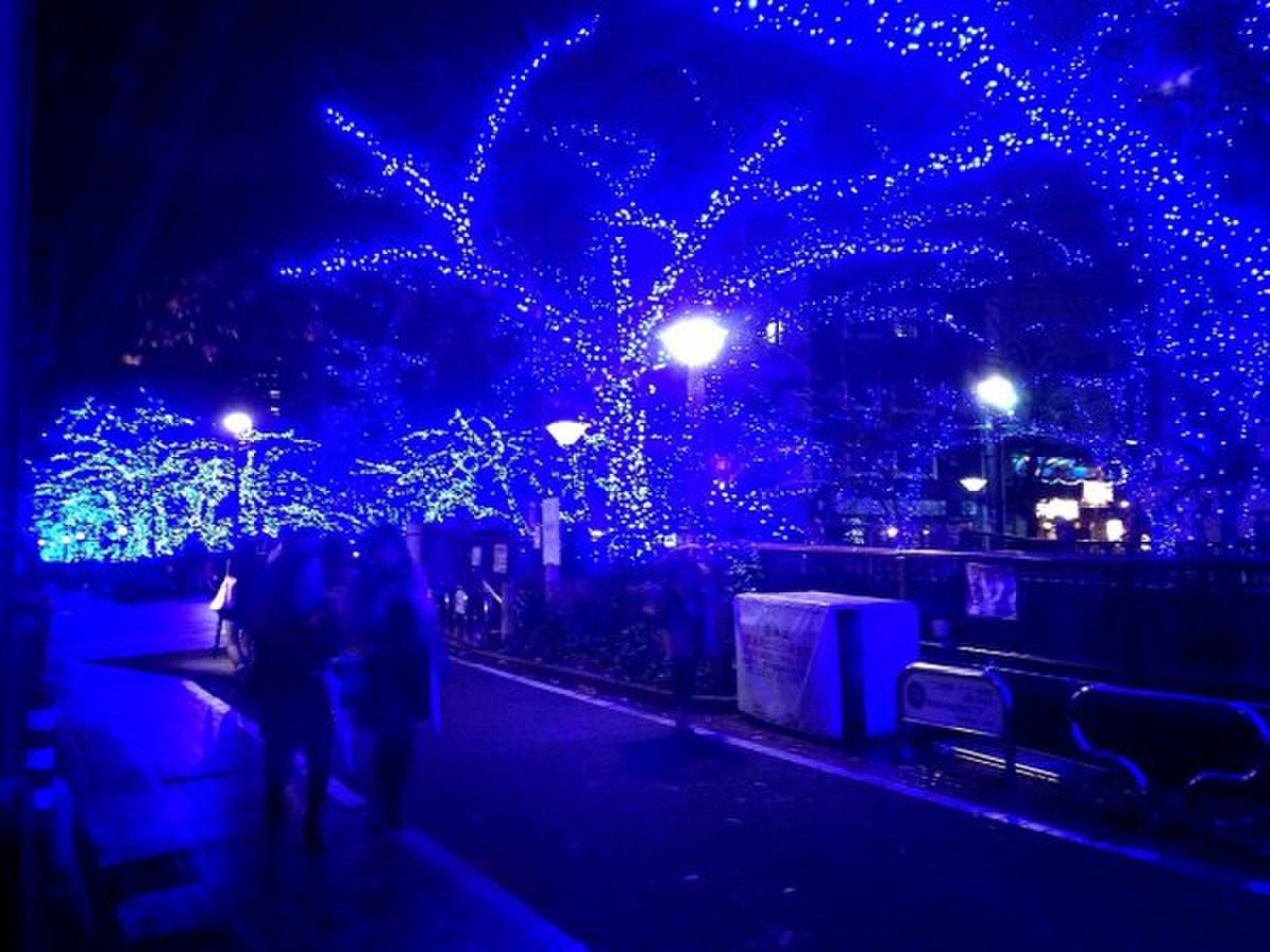 【2014年スタート!中目黒の「青の洞窟」でイルミネーションデート】冬のクリスマスにおすすめコース