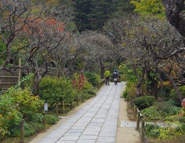 【鎌倉さんぽ】花のお寺「東慶寺」は女性のためのパワースポット!悪縁を切り良縁を呼びます♡
