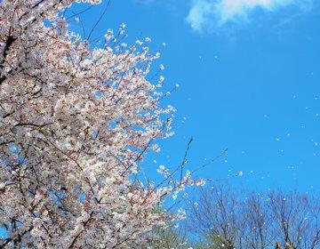 【東京・武蔵野市】今年の春はどこに行こう?お花見は井の頭恩賜公園が、まさにインスタ映えスポット!