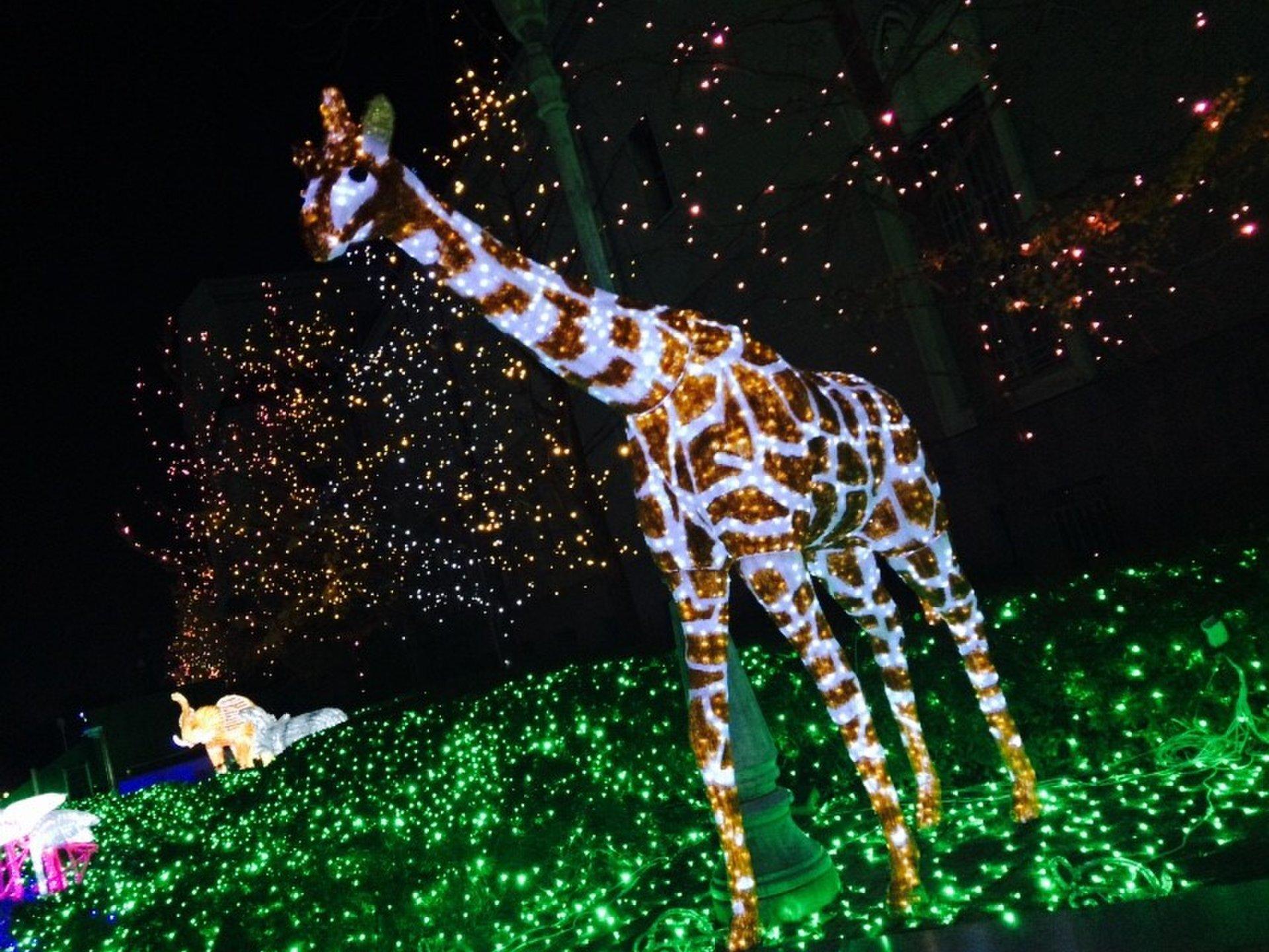 【この冬行きたい神秘的な動物園】大阪の天王寺動物園のイルミネーションがデートにぴったり♪