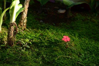 熱川バナナワニ園