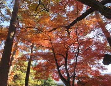 【長野・軽井沢】紅葉の秋!横浜から片道2100円で楽しめる!のんびり癒され日帰り旅行プラン