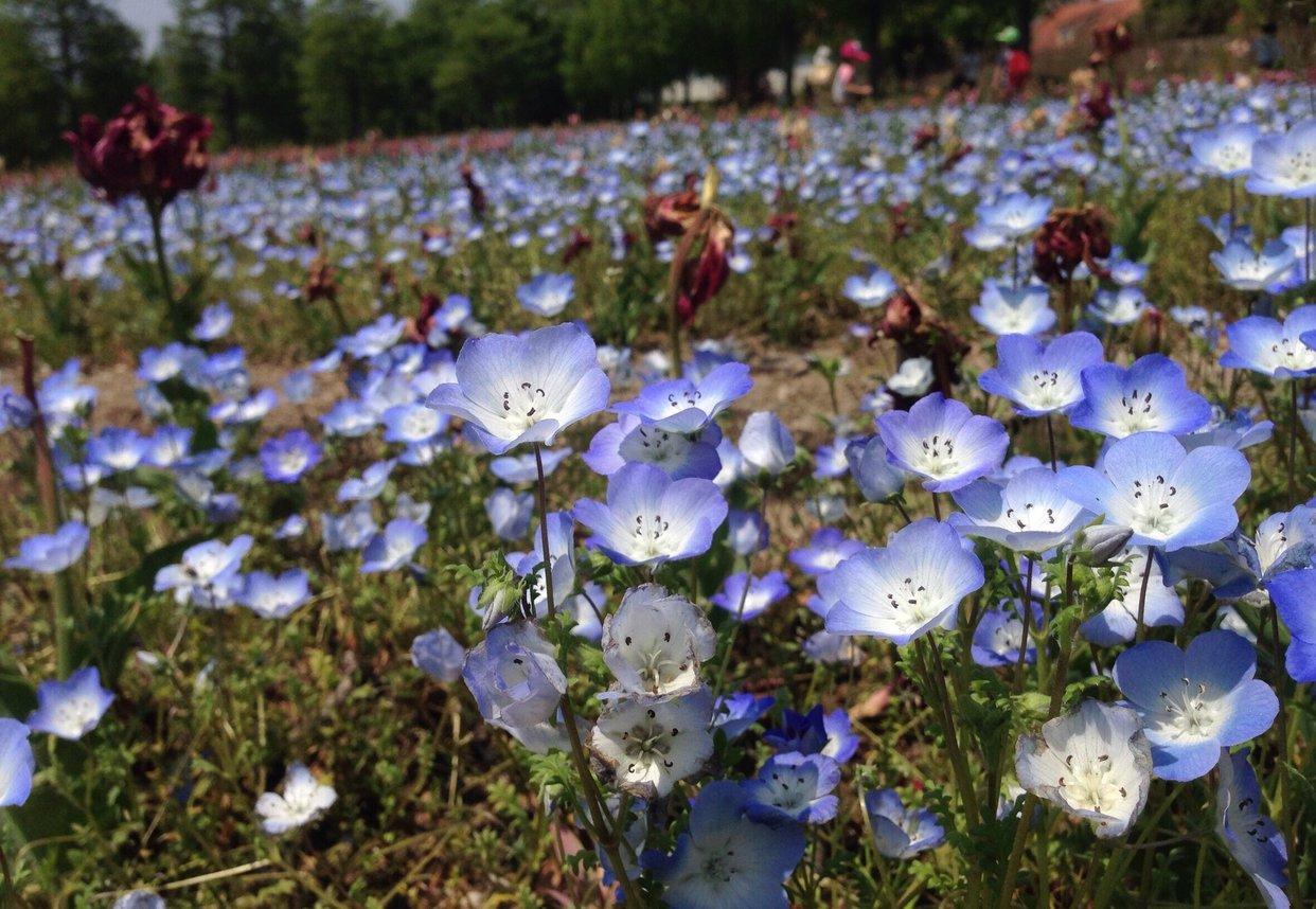 滋賀農業公園 ブルーメの丘