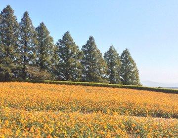 【宮崎県で花を見るならココ!】広大なお花畑とフローランテ宮崎
